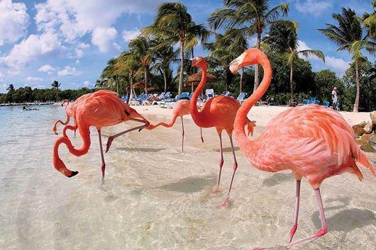 Immagine di Catana 471 nei Caraibi Olandesi (Aruba, Bonaire, Curacao)
