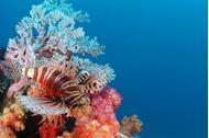 Immagine di Seychelles | Arcipelago delle Amirantes | Crociera su catamarano