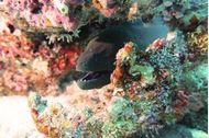 Crociera alle Maldive - Mondovela