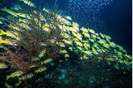 Immagine di foto barcone maldive serenity